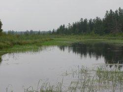 wild rice at Swamp Creek, Nick Vanderpuy