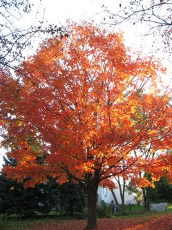 My Gorgeous Tree