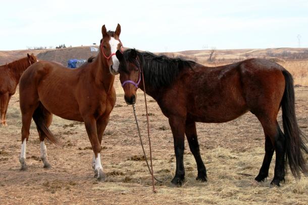 War ponies 11.15.2016